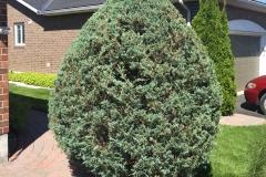 Ottawa Hedge Trimming - Hedge Planting