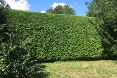 Ottawa Hedge Trimming - Hedge Trimming