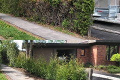 Ottawa Hedge Trimming - Hedge Replacement