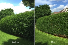 Ottawa Hedge Trimming - Tree trimming