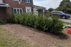 Ottawa Hedge Trimming - Hedge Planting