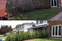 Ottawa Hedge Trimming - Hedge Trimming