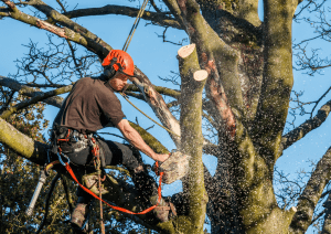 Tree Cutting service Ottawa
