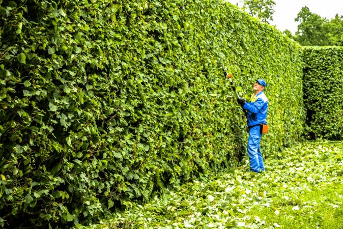 Hedge trimming Ottawa