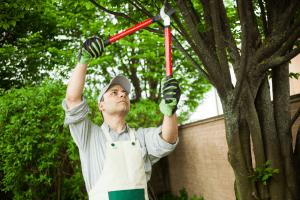 Tree service ottawa