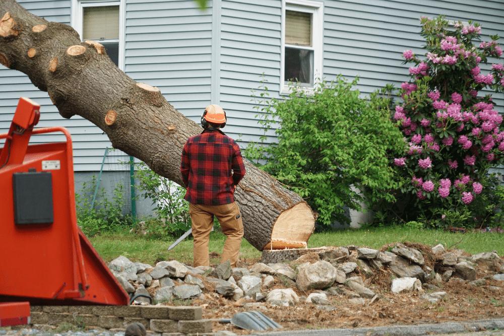 Tree Remval Ottawa
