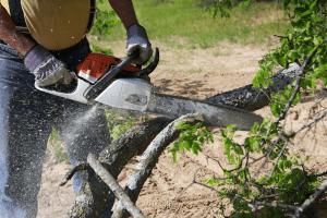 Ottawa Tree Removal Service