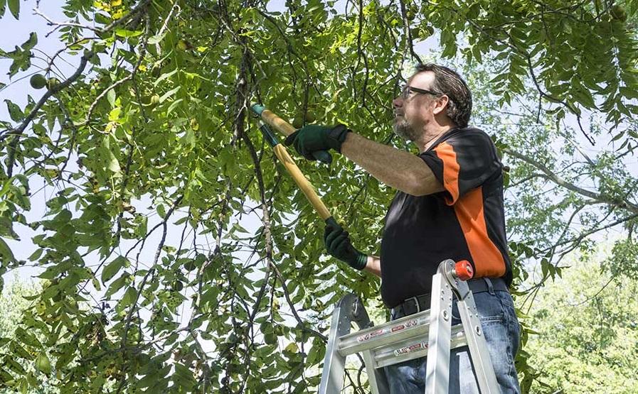 tree trimming ottawa