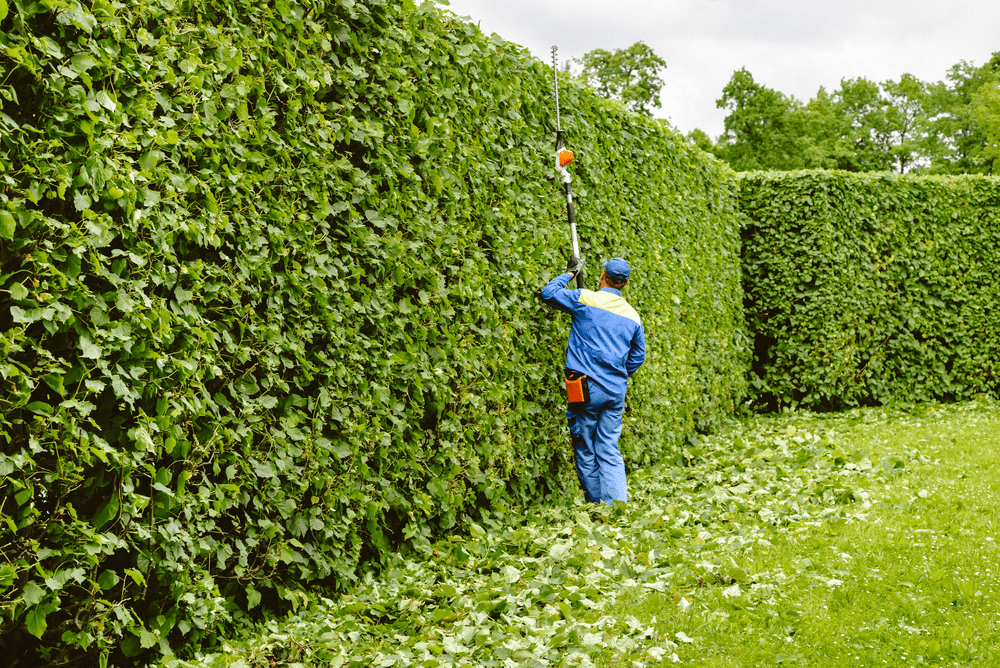 Tree Pruning Ottawa