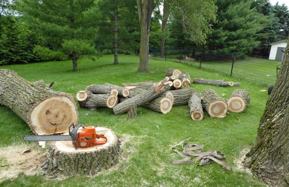 tree removal in Ottawa