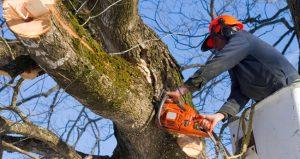 tree cutting service in Ottawa