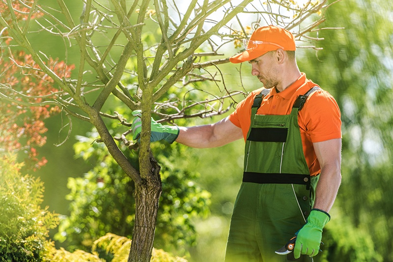 Ottawa tree services