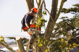 Tree removal services in Ottawa