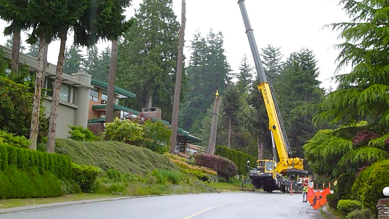 Tree_Removal