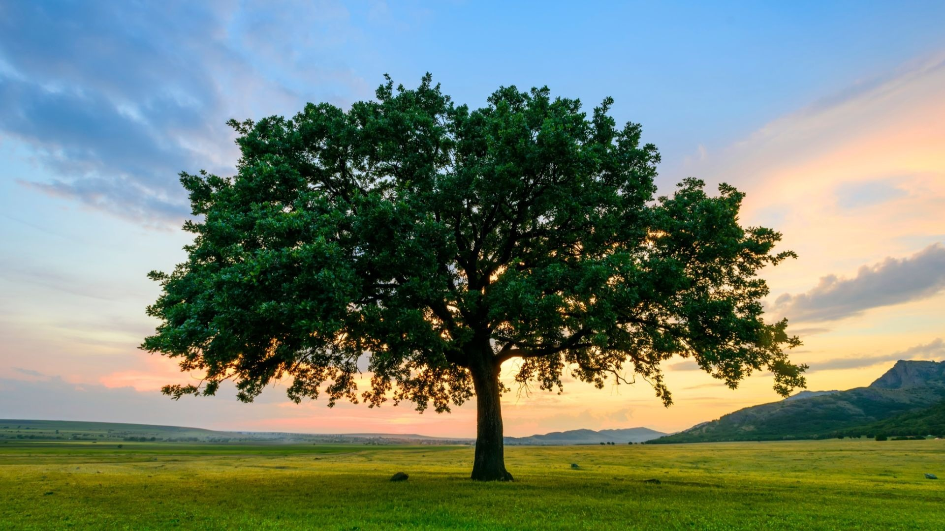 How To Choose Right Tree for Your Yard