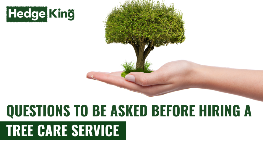QUESTIONS TO BE ASKED BEFORE HIRING A TREE CARE SERVICE