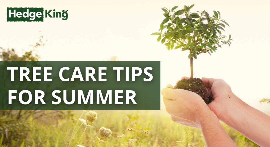 TREE CARE TIPS FOR SUMMER