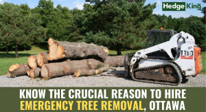 KNOW THE CRUCIAL REASON TO HIRE EMERGENCY TREE REMOVAL, OTTAWA
