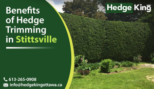 Benefits of Hedge Trimming in Stittsville