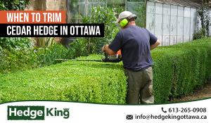 When to Trim Cedar Hedge in Ottawa
