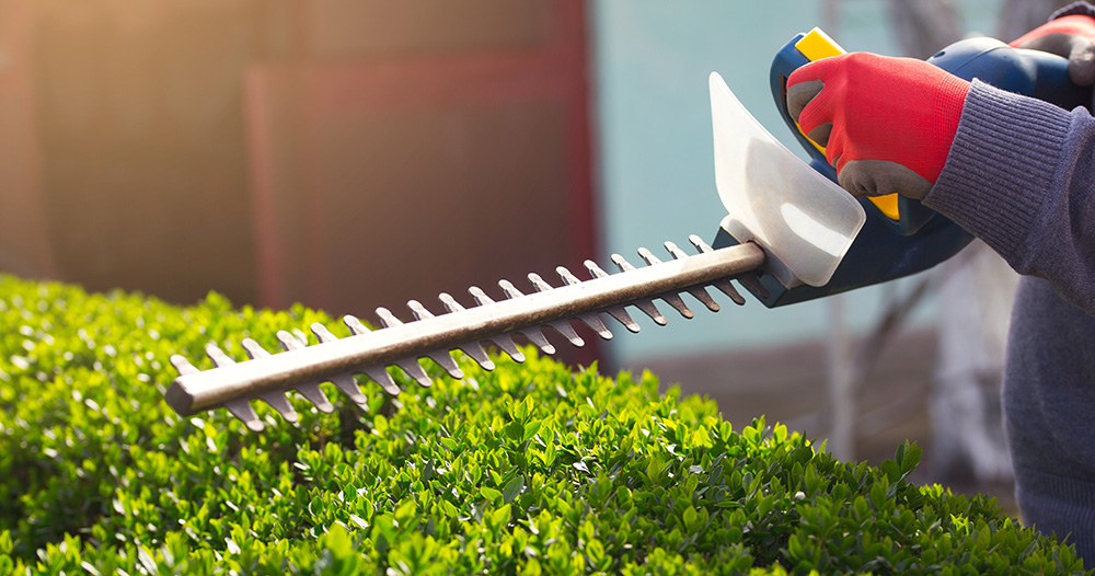 Cutting a hedge with electrical hedge trimmer.
